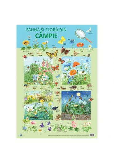 Plansa - Fauna si flora din campie