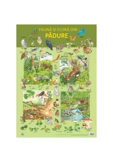 Plansa - Fauna si flora din padure