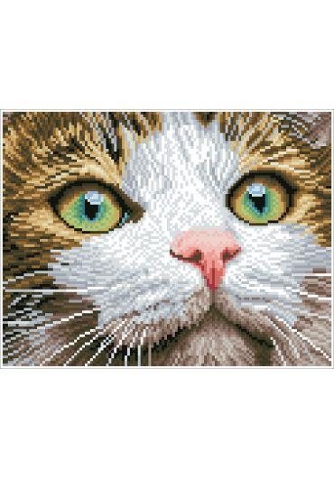 Tablou cu diamante - Pisicuta cu ochi verzi