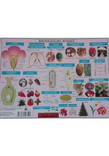 Plansa Biologie scolara - Botanica